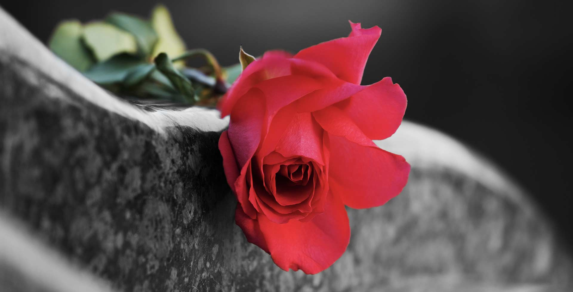 Rose on tombstone
